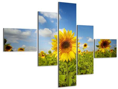 Aluminiumbild 5-teilig modern Sommer-Sonnenblumen
