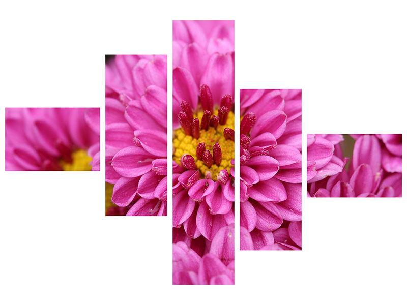 Aluminiumbild 5-teilig modern Chrysanthemen