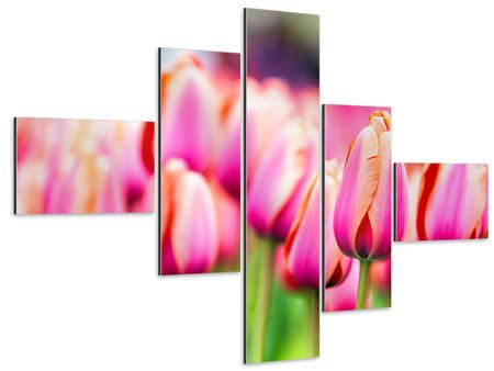 Aluminiumbild 5-teilig modern Pretty in Pink