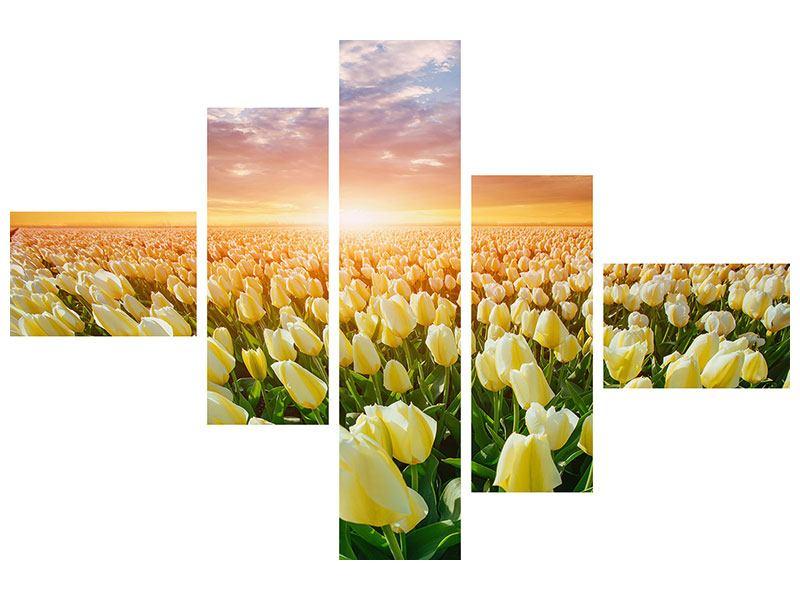 Aluminiumbild 5-teilig modern Sonnenaufgang bei den Tulpen