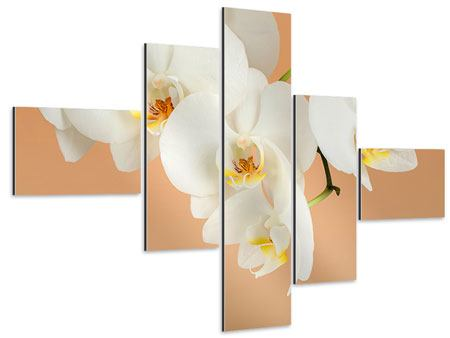 Aluminiumbild 5-teilig modern Weisse Orchideenblüten
