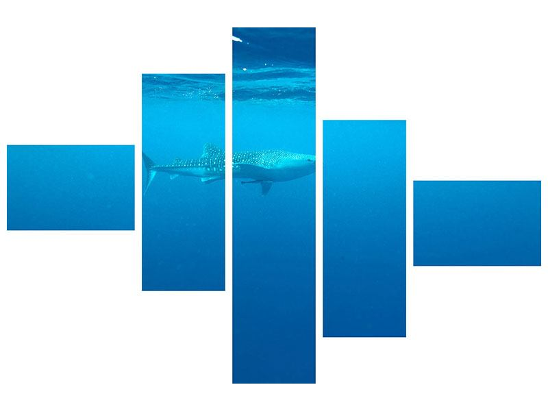 Aluminiumbild 5-teilig modern Der Walhai