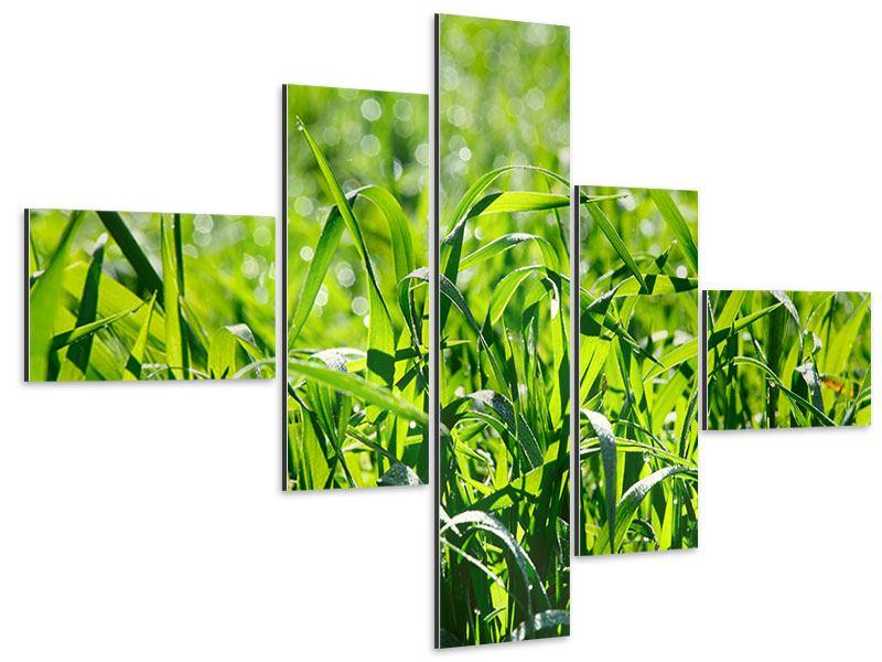 Aluminiumbild 5-teilig modern Sonniges Gras