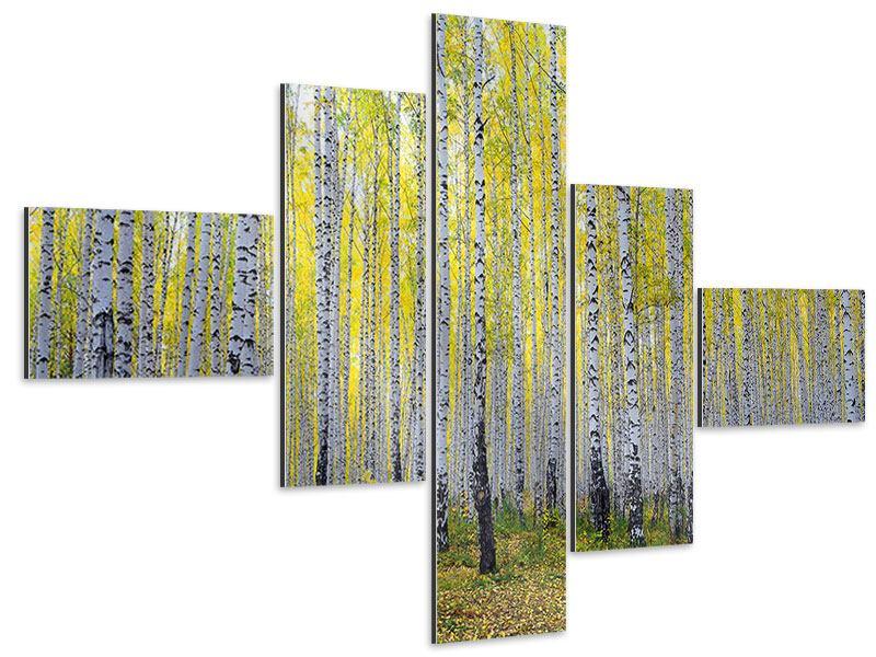 Aluminiumbild 5-teilig modern Herbstlicher Birkenwald