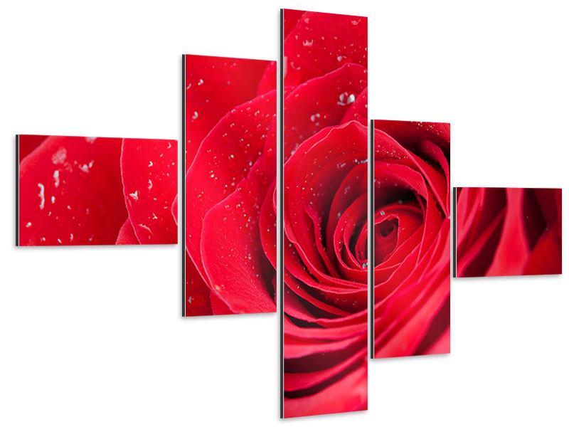 Aluminiumbild 5-teilig modern Rote Rose im Morgentau