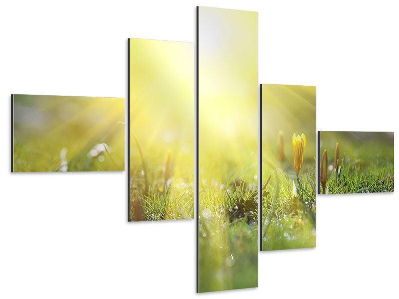 Aluminiumbild 5-teilig modern Blumige Wiese
