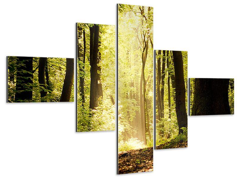 Aluminiumbild 5-teilig modern Sonnenaufgang im Wald