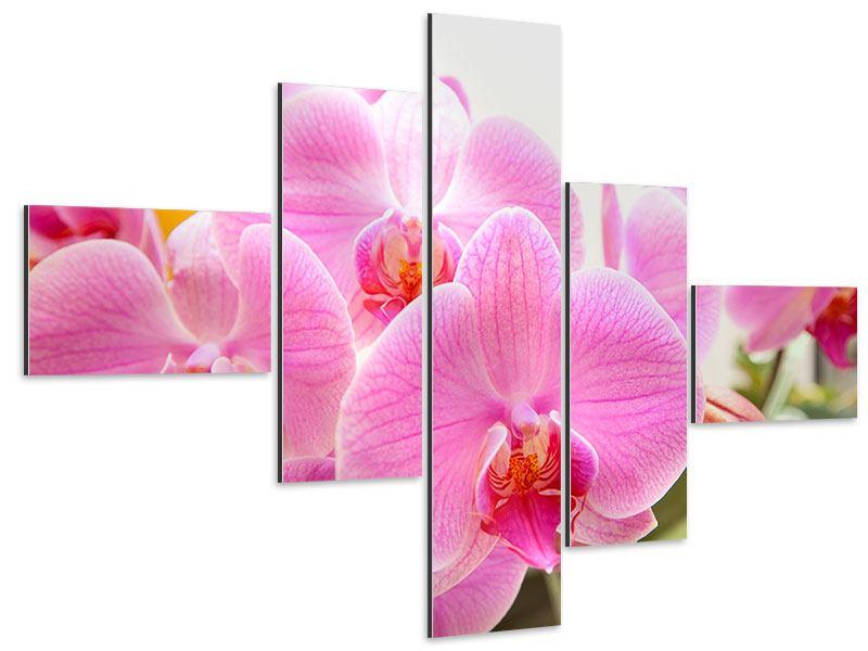 Aluminiumbild 5-teilig modern Königliche Orchideen