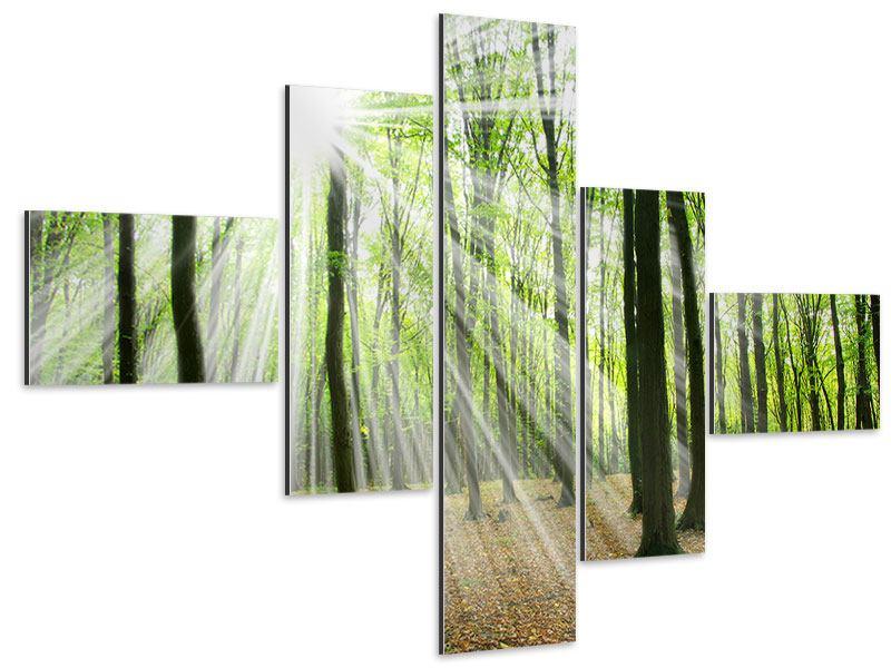 Aluminiumbild 5-teilig modern Magisches Licht in den Bäumen