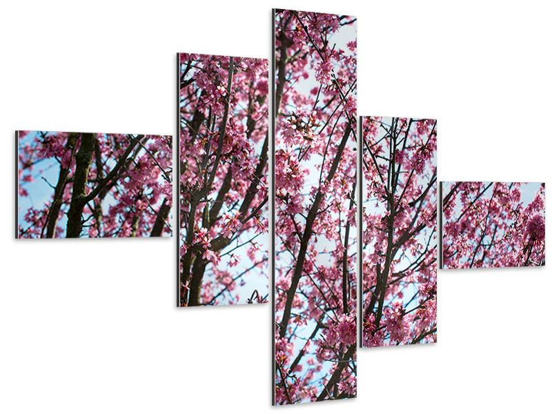 Aluminiumbild 5-teilig modern Japanische Blütenkirsche