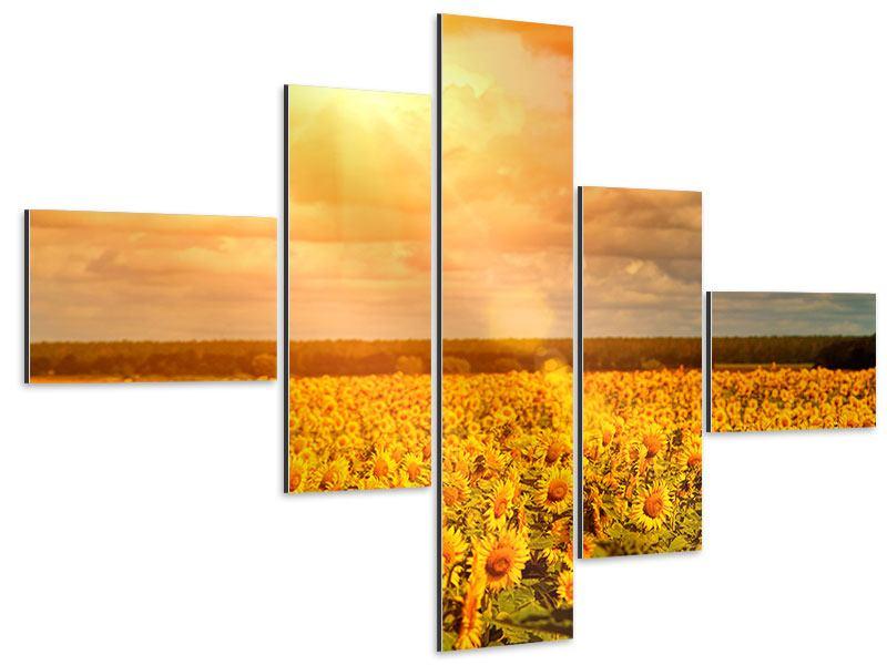 Aluminiumbild 5-teilig modern Goldenes Licht für Sonnenblumen