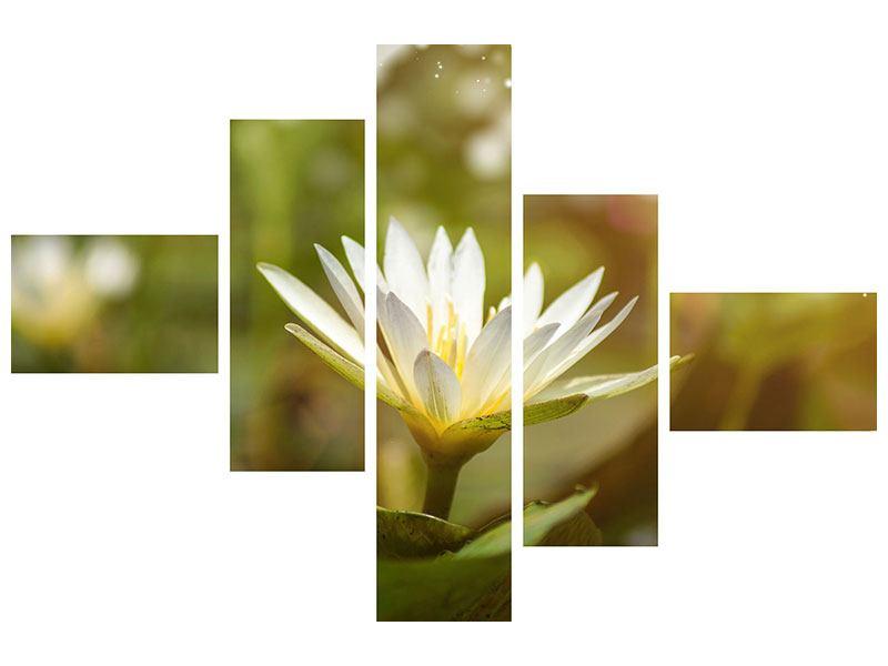 Aluminiumbild 5-teilig modern Lilien-Lichtspiel
