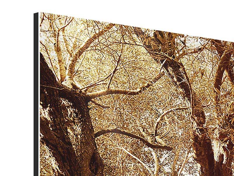 Aluminiumbild 5-teilig modern Olivenbäume im Herbstlicht