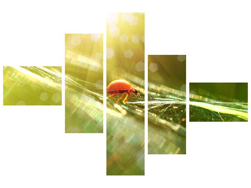 Aluminiumbild 5-teilig modern Marienkäfer im Sonnenlicht