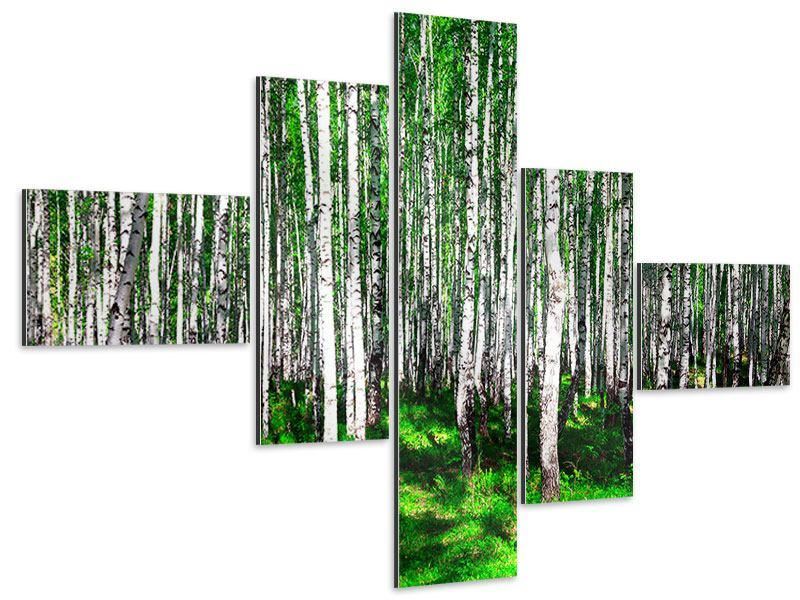 Aluminiumbild 5-teilig modern Sommerlicher Birkenwald