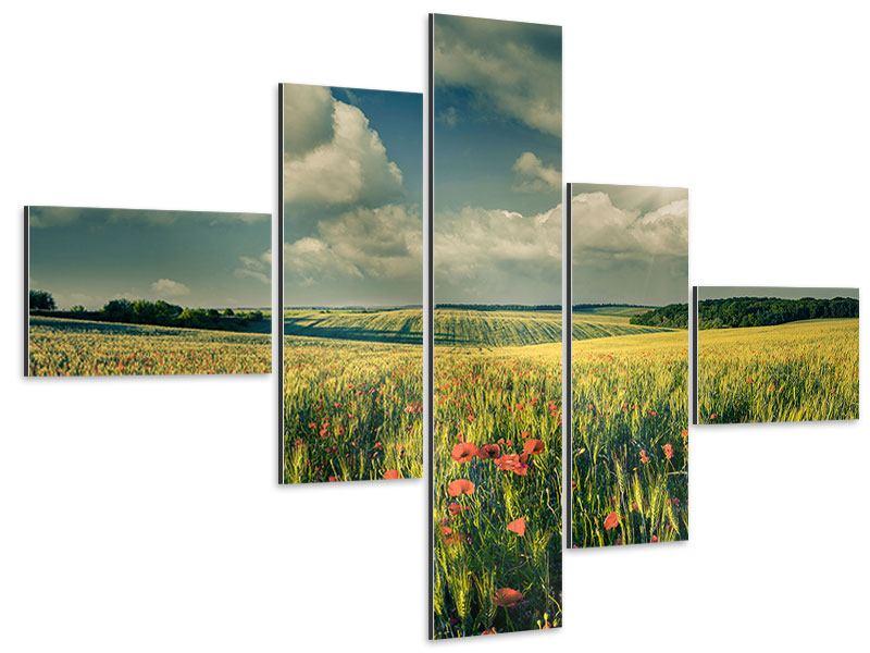 Aluminiumbild 5-teilig modern Der Mohn im Weizenfeld