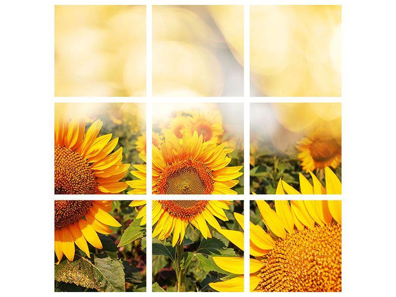 Aluminiumbild 9-teilig Das Licht der Sonnenblumen