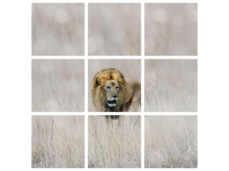 Aluminiumbild 9-teilig Der Löwe