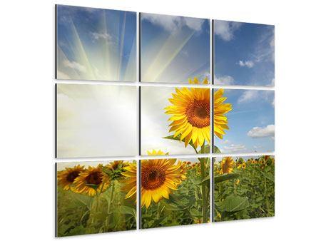 Aluminiumbild 9-teilig Sonnenblumen im Sonnenlicht