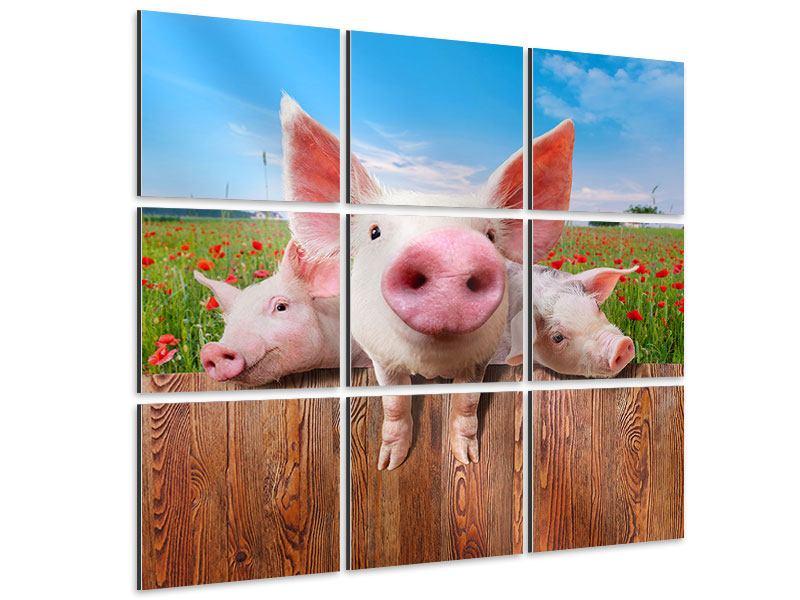 Aluminiumbild 9-teilig Schweinchen im Glück