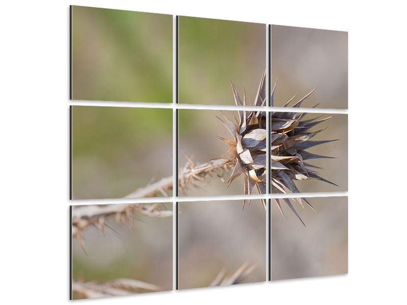Aluminiumbild 9-teilig Die Wüstenblume