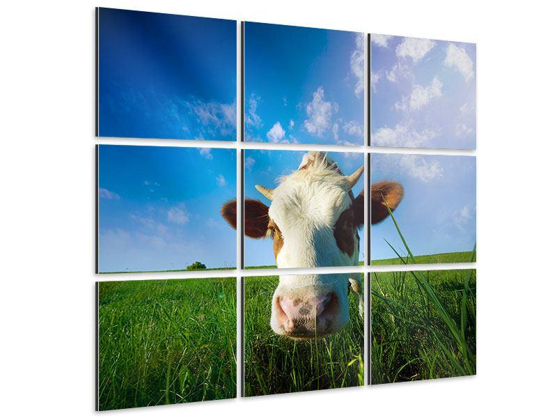 Aluminiumbild 9-teilig Die Kuh