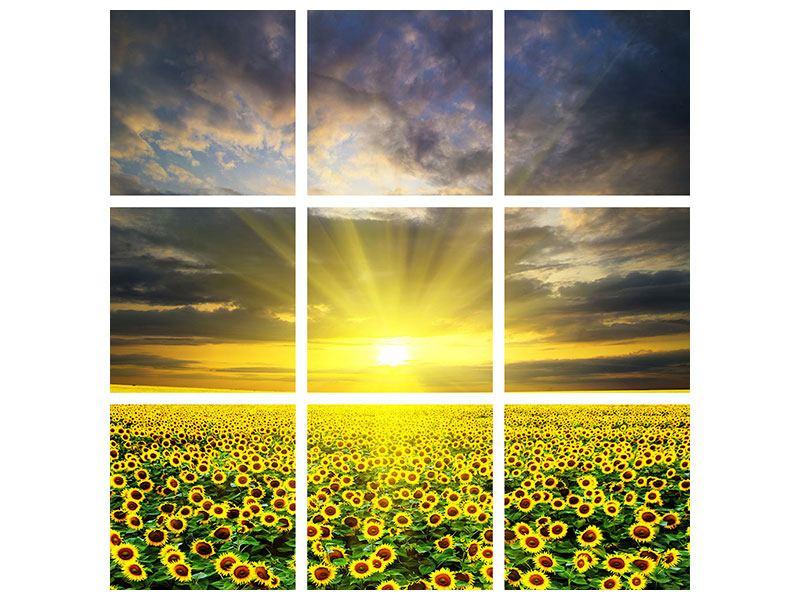 Aluminiumbild 9-teilig Abenddämmerung bei den Sonnenblumen