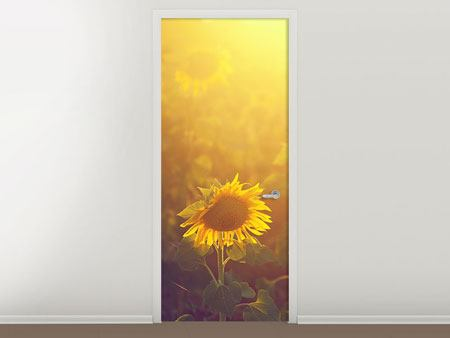 Türtapete Sonnenblumen im goldenen Licht