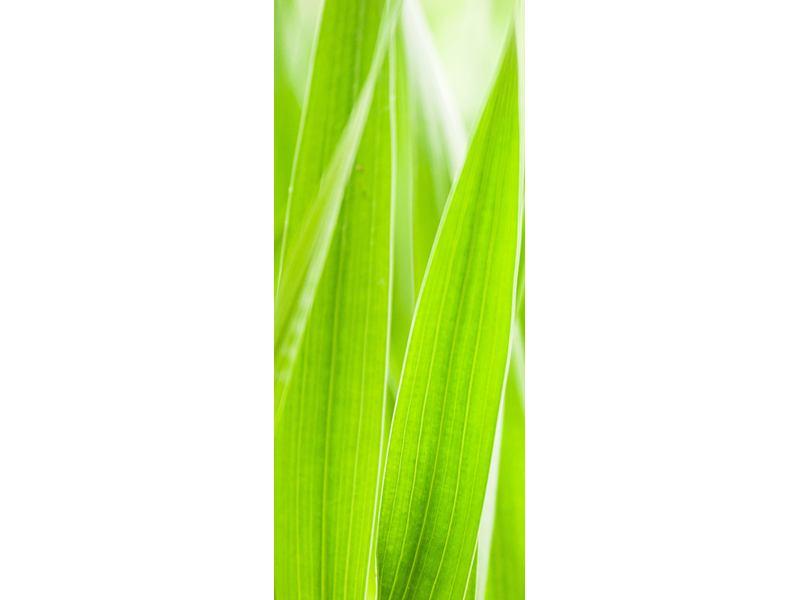 Türtapete Gras XXL