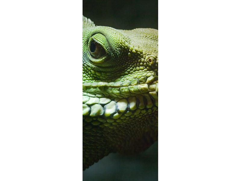 Türtapete XXL Leguan