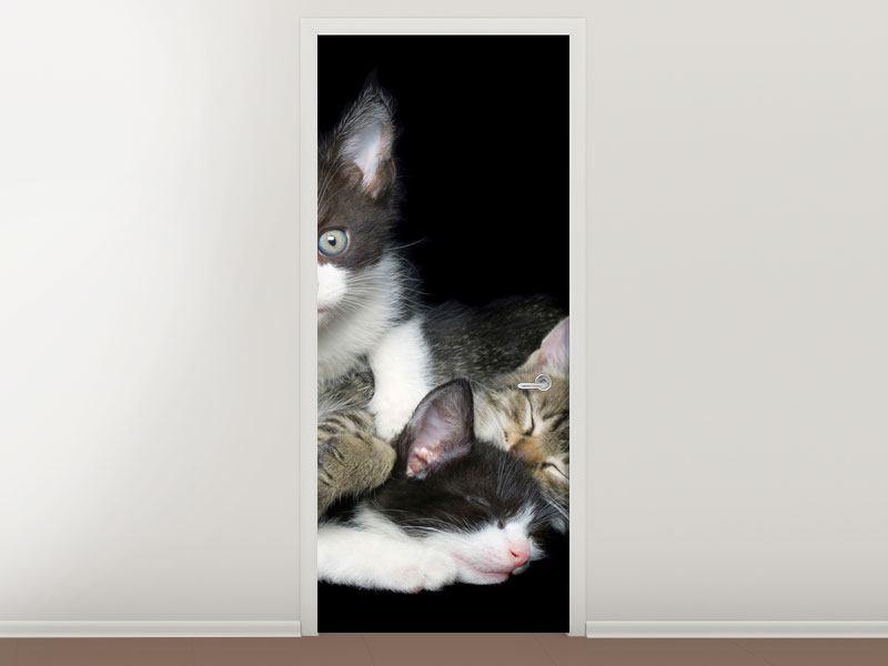 Türtapete Katzenquartett