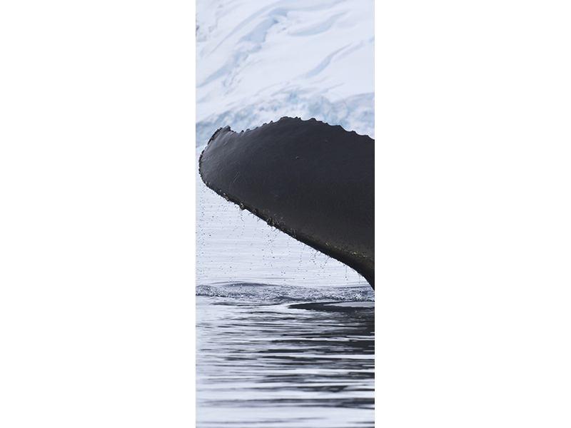 Türtapete Der Buckelwal
