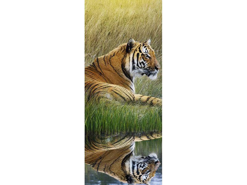 Türtapete Der Tiger