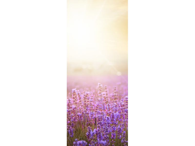 Türtapete Sonnenuntergang beim Lavendelfeld