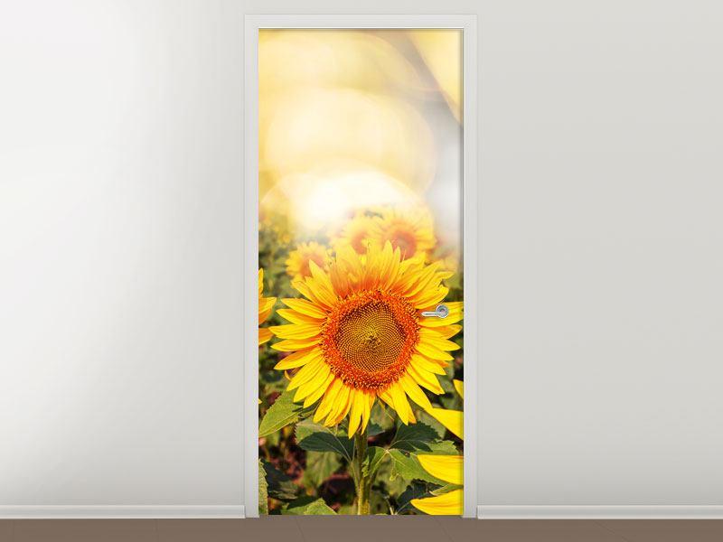 Türtapete Das Licht der Sonnenblumen