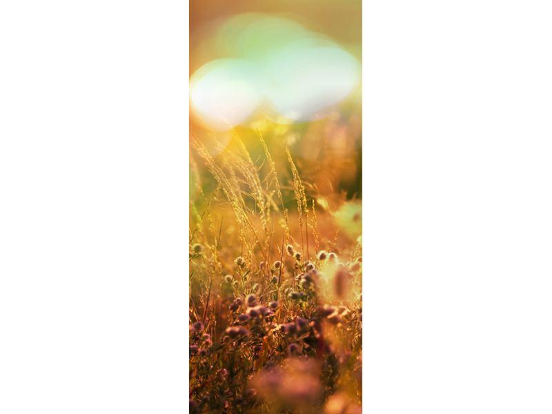 Türtapete Blumenwiese in der Abenddämmerung