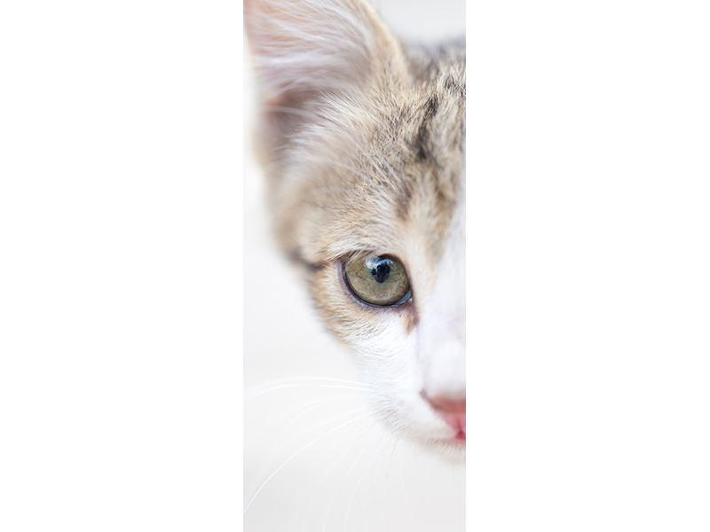 Türtapete Katzenkind