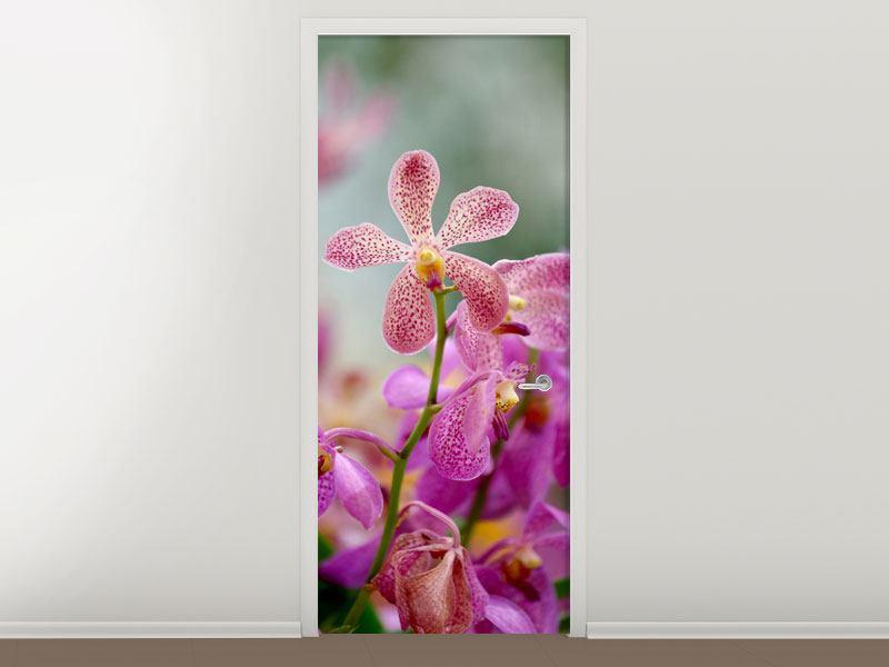 Türtapete Orchidee Pünktchen