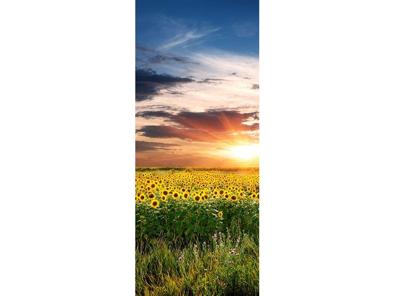 Türtapete Ein Feld von Sonnenblumen