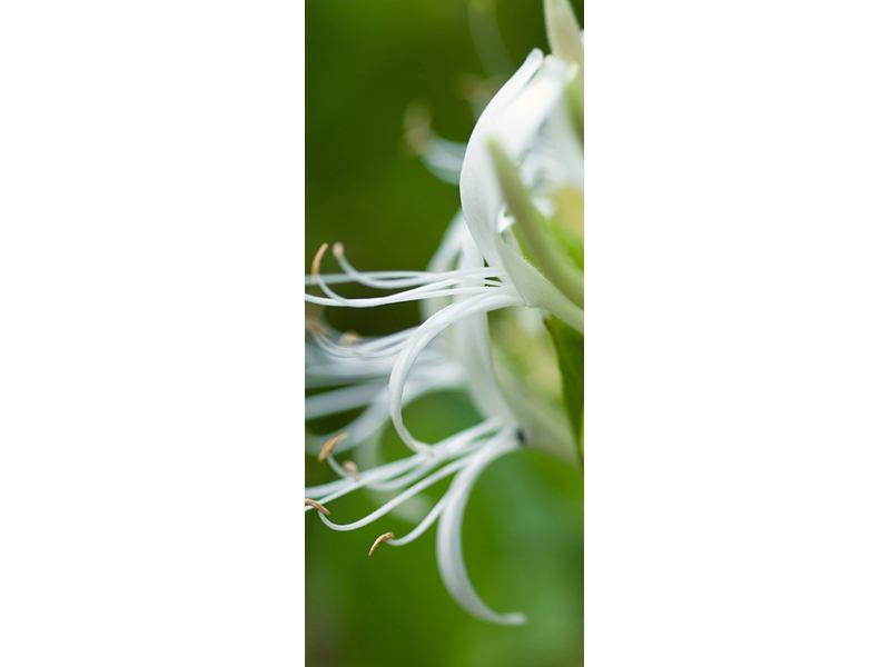 Türtapete Makro Blüte