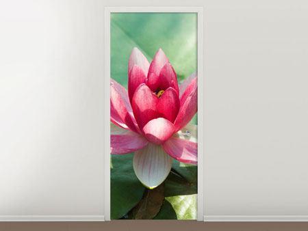 Türtapete Der Frosch und das Lotusblatt