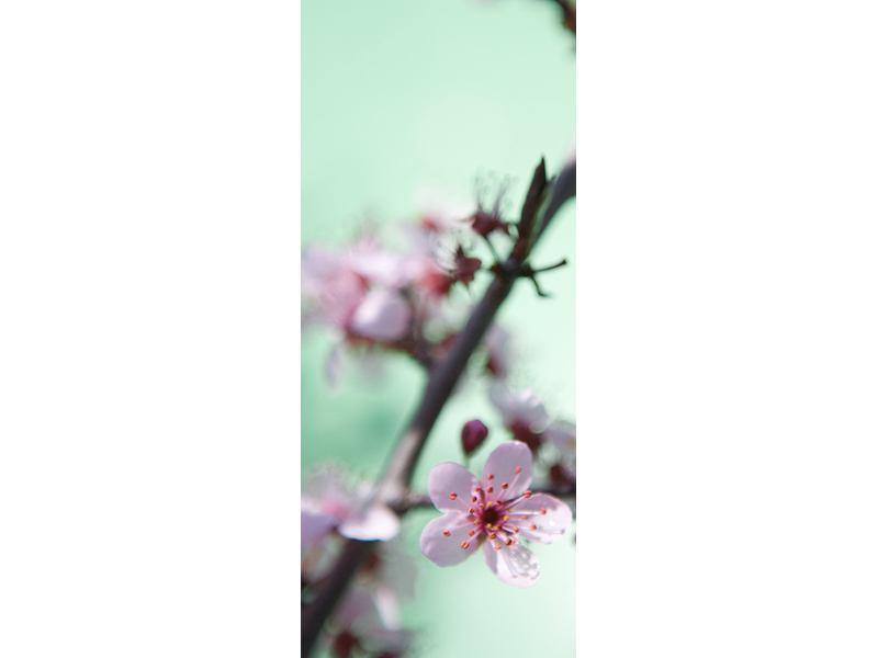 Türtapete Die japanische Kirschblüte