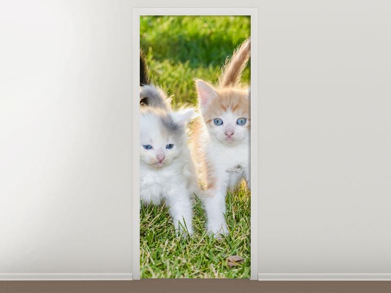 Türtapete Katzenbabys