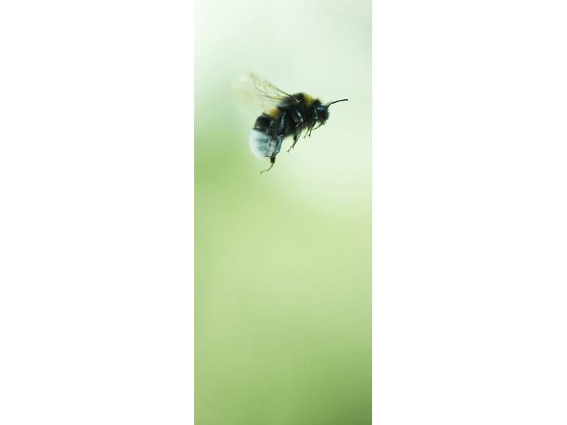 Türtapete Die Biene