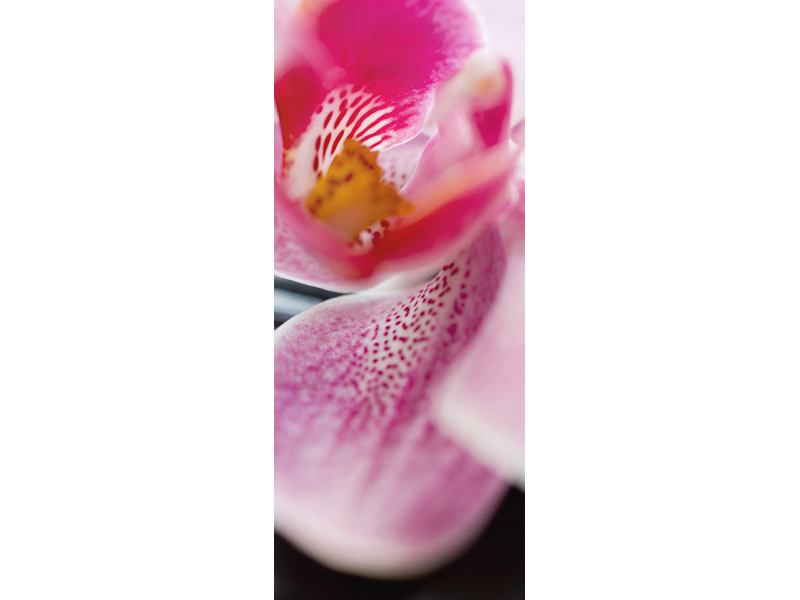 Türtapete Close up Orchidee