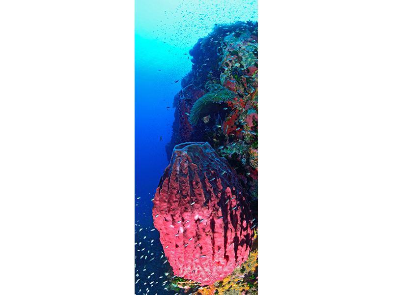 Türtapete Unterwasserwelt