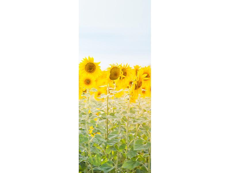 Türtapete Im Sonnenblumenfeld