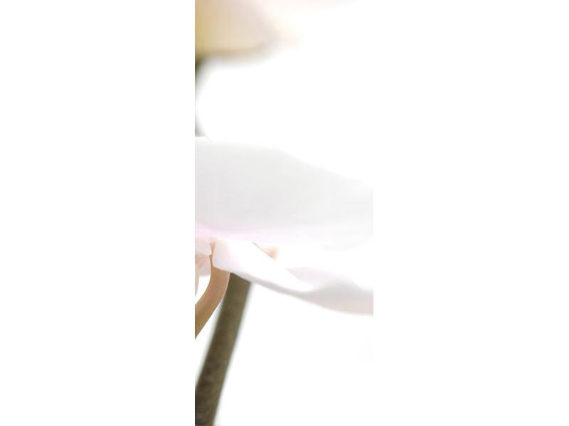 Türtapete XXL Orchideenblüte