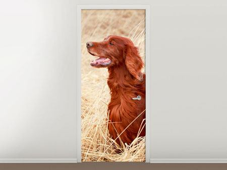 Türtapete Irish Red Setter