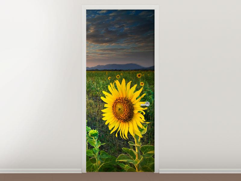 Türtapete Sonnenblumenfeld im Abendrot